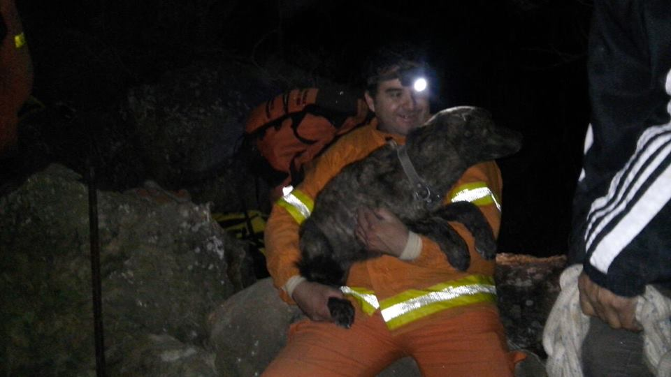 Firefighters Rescue Dog Trapped 5 Days in Between Boulders