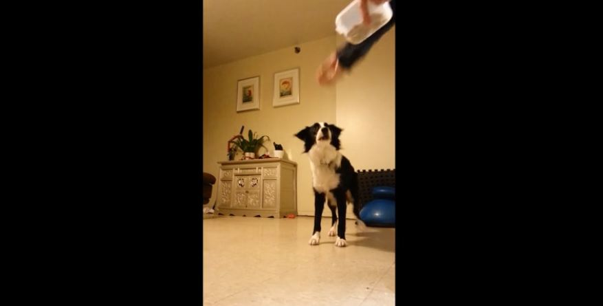 This Dog Is Quite The Dramatic Actor. He Completely Nailed That Scene