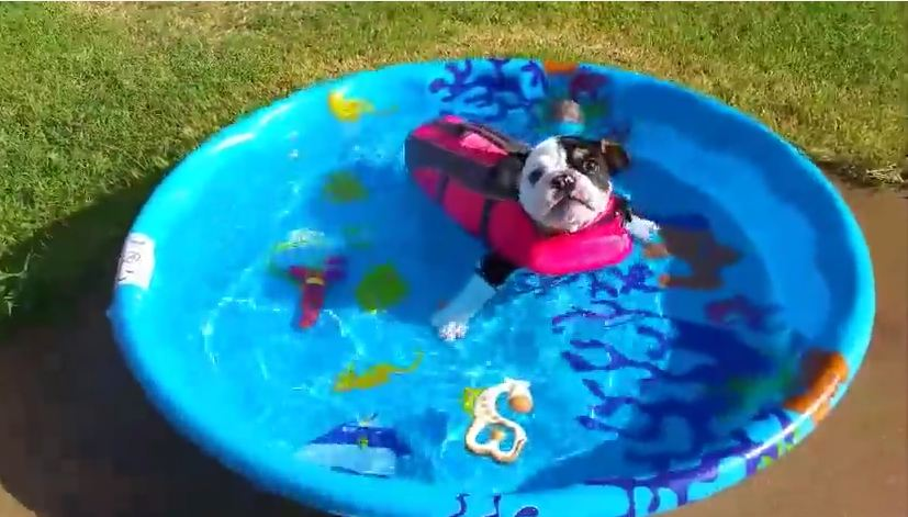 Puppy Born With Half A Spine Gets To Swim Like A Normal Dog For The First Time