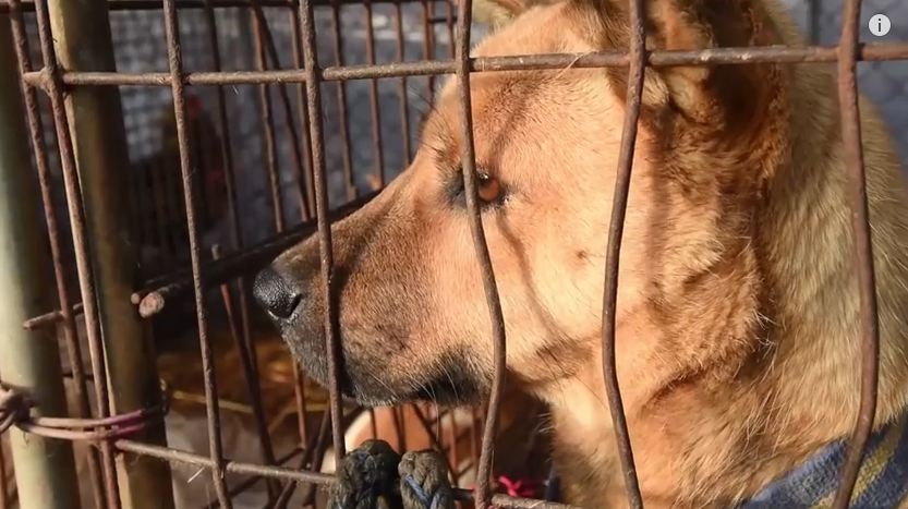 These Dogs Were Caged For A Long Time. See How Happy They Are After Their Rescue