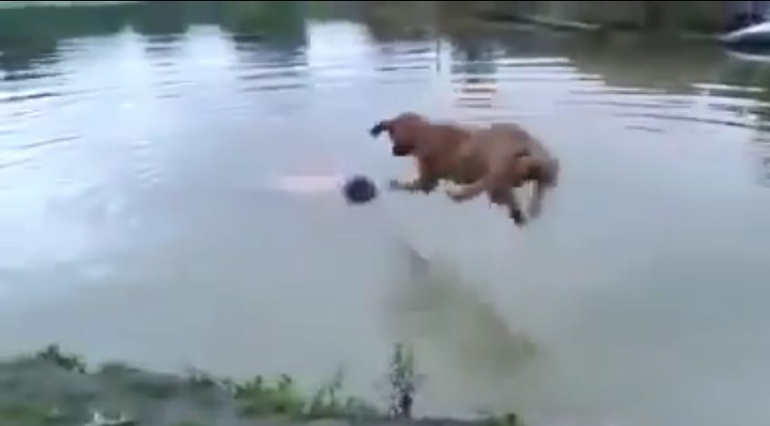 "Dog ""Saves"" Drowning Human"