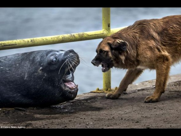 Sea Lion Wants a Piece of Dog's Tasty Treat