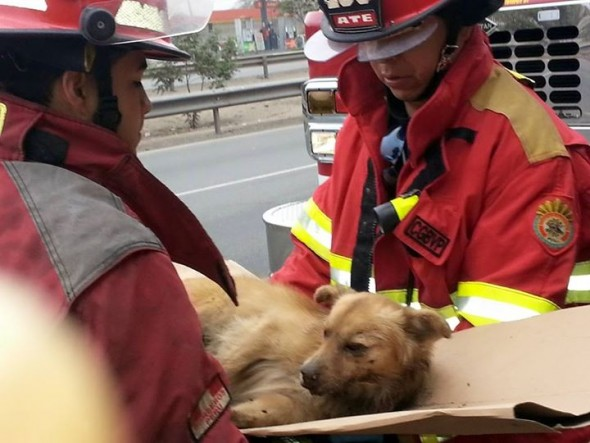 Firefighters Save Dog Believed to Be Dead