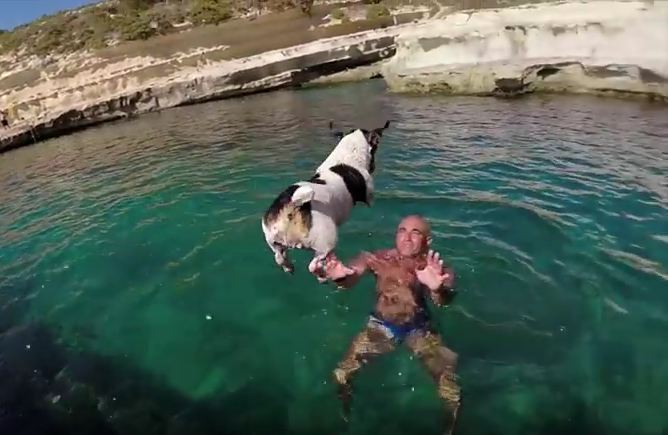 Meet Titti! The Dog Who Loves To Go Diving With Her Human!