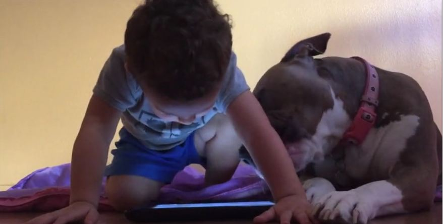 This Dog Is SO Jealous Of His Little Brother's iPad…It's The Cutest Thing Ever