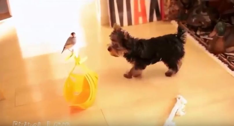 They Didn't Agree At First, But This Dog And Bird Became Amazing Friends