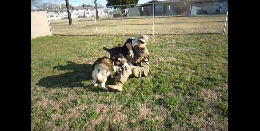 Huskies See Their Dad After 9 Months And Their Reaction Is Just Amazing!