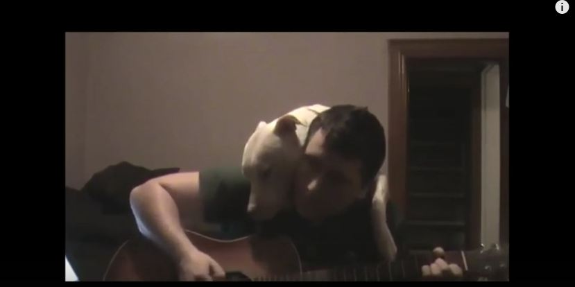 This Adorable Pit Bull Can't Stop Hugging The Man Playing Music For Him