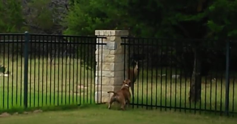When A Deer Comes Up To Their House, Their Dog Makes A New Best Friend