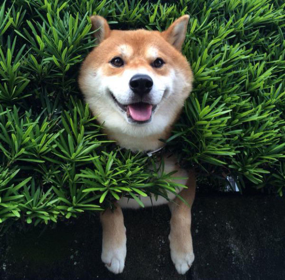 This Dog's Reaction To Getting Stuck In A Bush Gave Me Some Serious Giggles