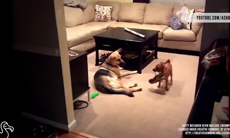 What Dogs Really Do When No One's Watching