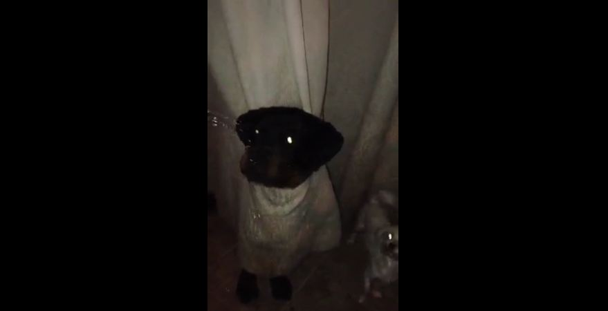 When This Puppy Plays Hide-And-Seek, He Really Goes All Out…