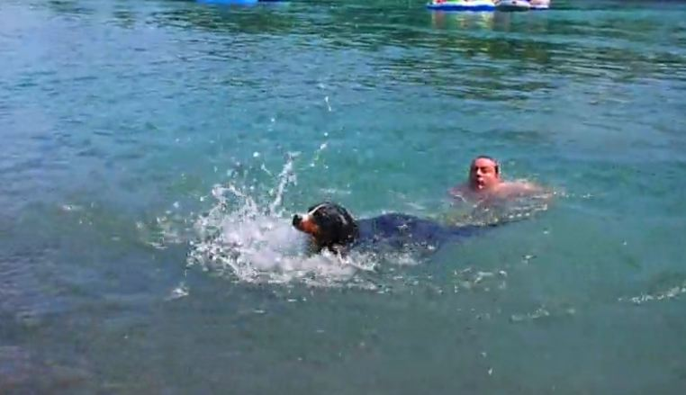 Dog Paddling Should Be Natural, But This Pup's Technique Is Hilarious