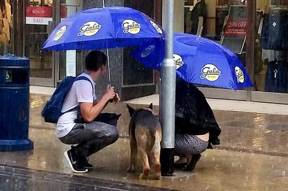 Kind-Hearted Couple Cares for Dog Caught in a Rainstorm