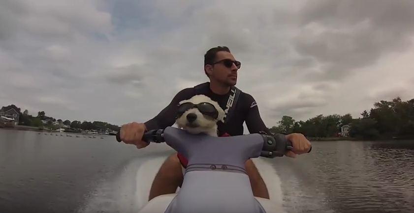 Dog Rides Jet Ski