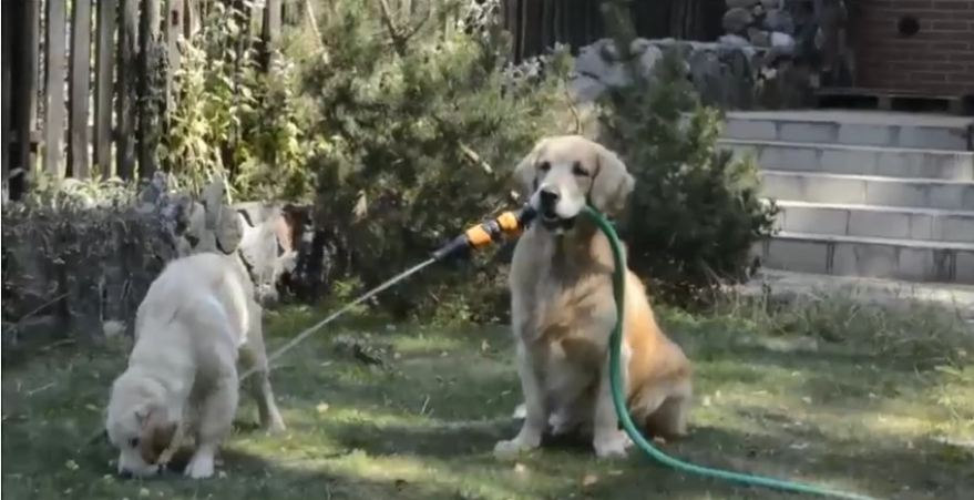 When Puppy Wants To Play With The Hose, Mommy Makes Sure There's No Mess