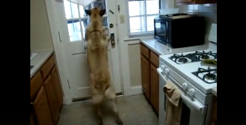 Her Dog Wouldn't Stop Barking. When You See Who Walked In The Door, You'll Smile.