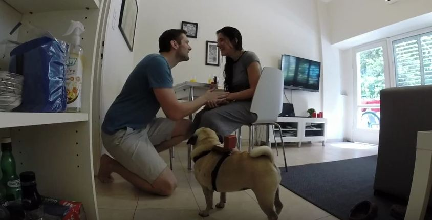 Precious Pug Helps Her Dog Dad Propose