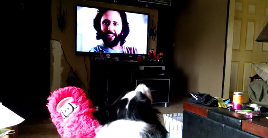 When This Dog Sees His Favorite Commercial, He Reacts In The Most Hilarious Way