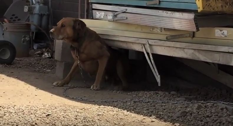 Man Rescues This Dog From A Horrible Life Of Cruelty And His Reaction Says It All