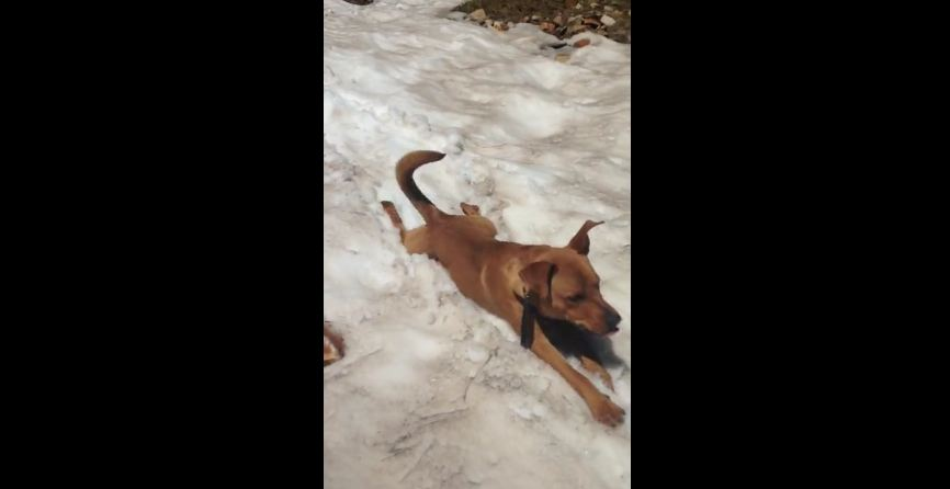 When This Dog Finds A Snowy Hill, He Sees An Opportunity To Do This