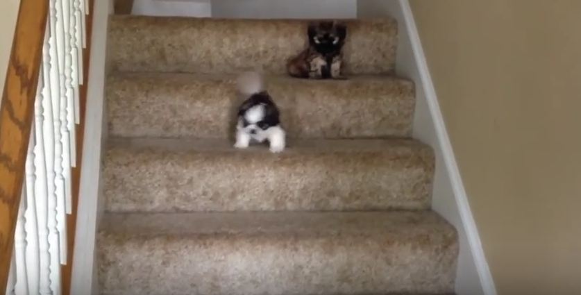 This Puppy Had No Trouble Going Down The Stairs, But Her Sister Needed Some Help