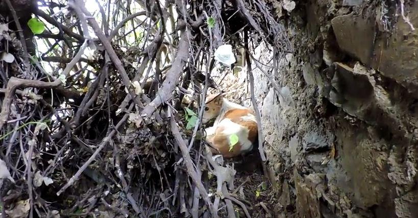 They Found A Traumatized Dog Stuck In A Shrub. The Reason Why Shocked Them.