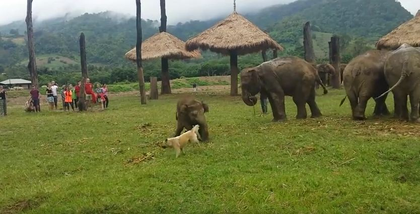 Watch The Cuteness That Occurs When A Baby Elephant Can't Keep Up With His Bud