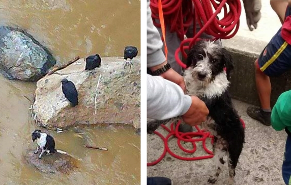 Commuter Saves Dog Thrown in Medellin River