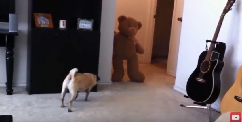 Cute Toys Scare Dogs