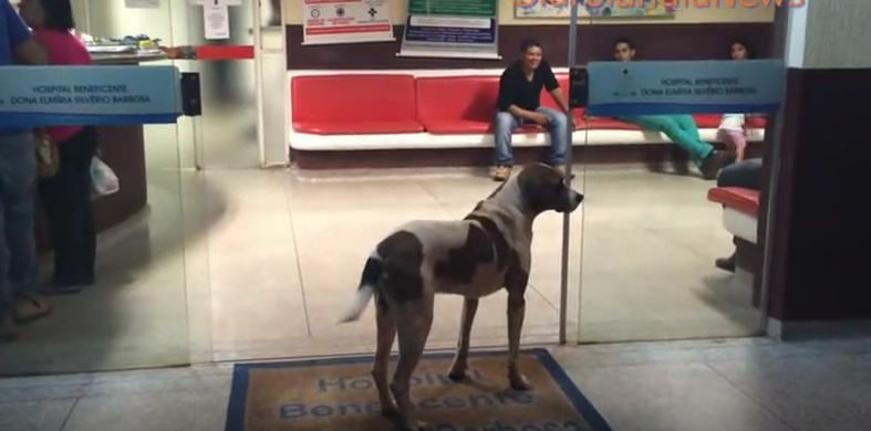 Loyal dog waited for his owner in front of the hospital…the end is heartbreaking