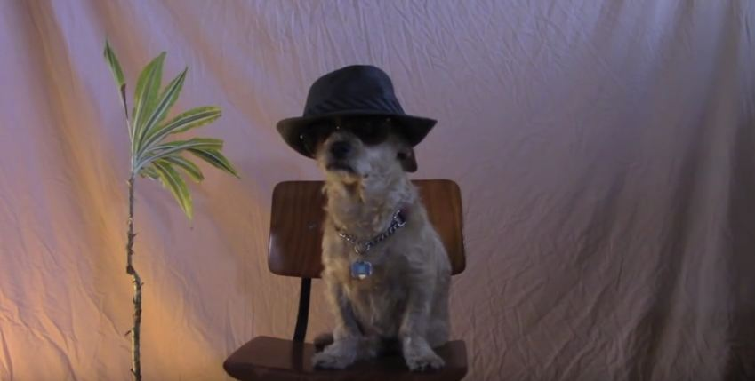 Dog Auditions For Saturday Night Live And Jaws Drop