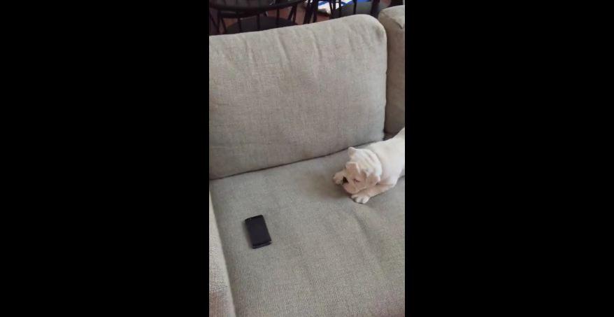 """Puppy adorably stalks his """"prey"""""""
