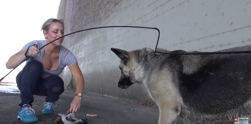 Scared German Shepherd Rescued From Los Angeles River