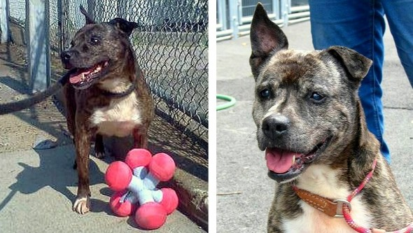 Loving Shelter Dog Still Waiting for a Home After 11 Years