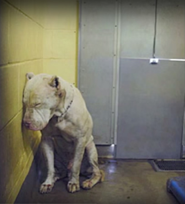 This Deaf Dog Was About To Be Put Down, But One Person Miraculously Changed It All