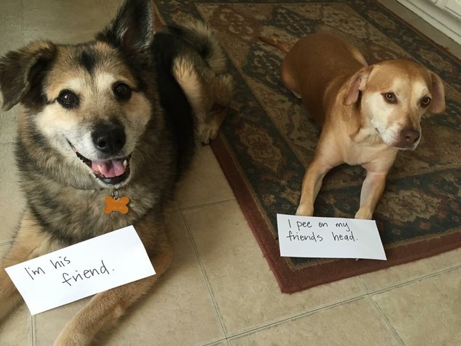 24 Dog-Shaming Photos, Because They Just Never Seem To Learn, Do They?