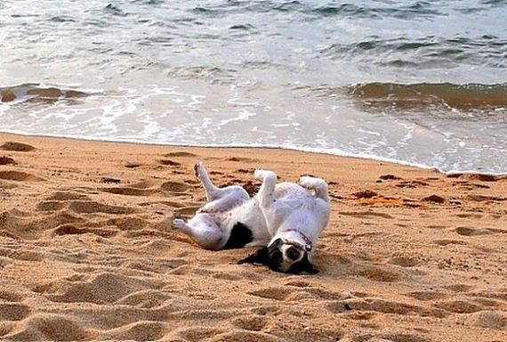 01-Dogs-Who-Have-Really-Enjoyed-Summer