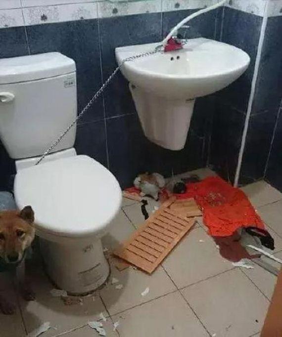 01-wc_dog