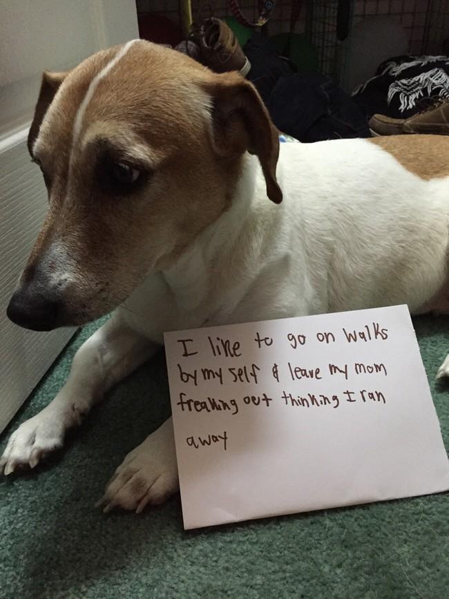 04-Dog-Shaming