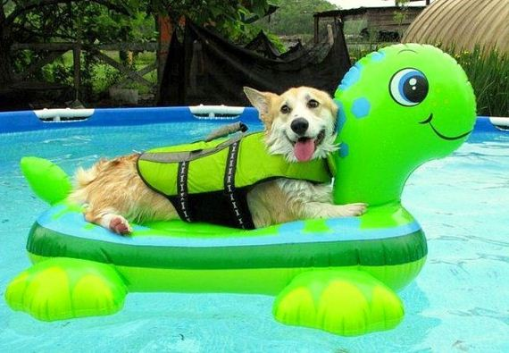 04-Dogs-Who-Have-Really-Enjoyed-Summer