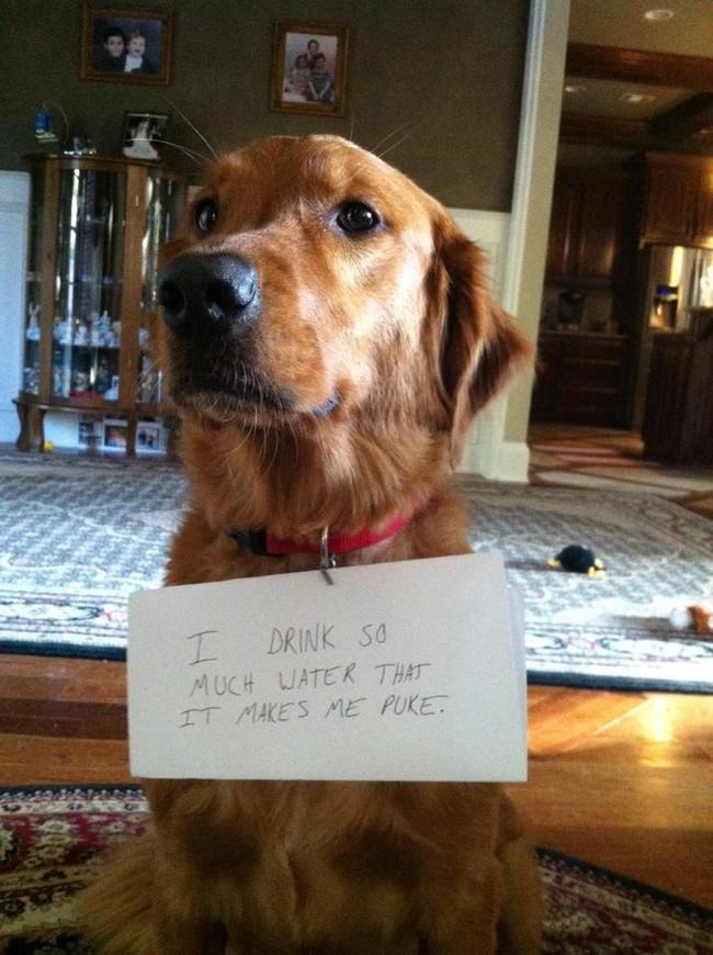 05-Dog-Shaming