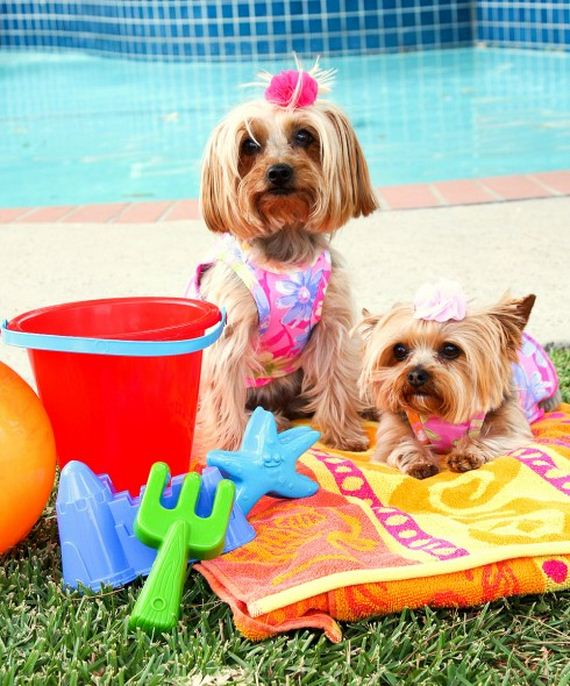 05-Dogs-Who-Have-Really-Enjoyed-Summer