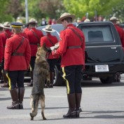 Canine Partner of Slain Mountie Cries at Funeral