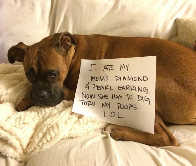 07-Dog-Shaming