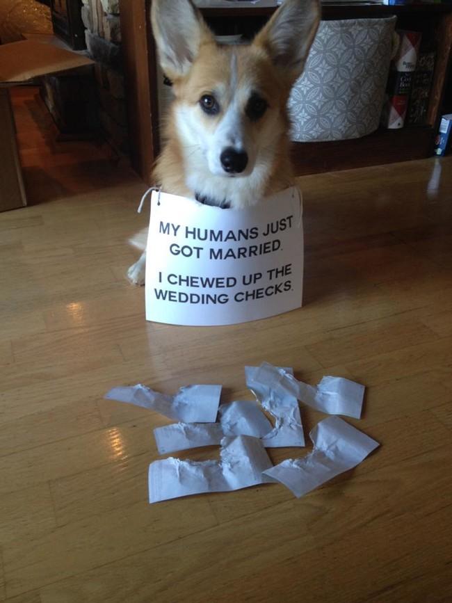 08-Dog-Shaming