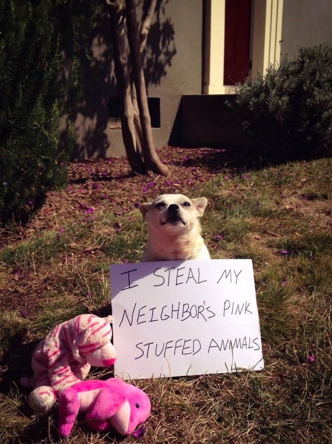 09-Dog-Shaming