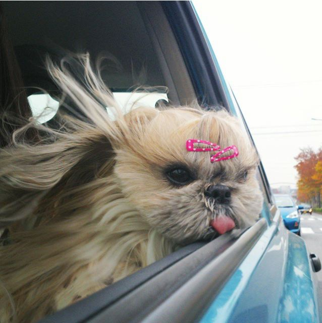 This Dog Might Have Better Hair Than Anyone We Know