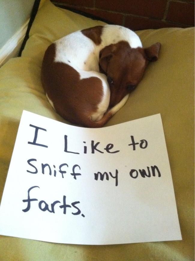 10-Dog-Shaming