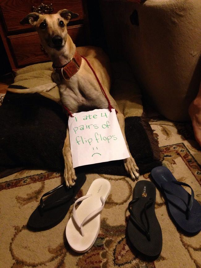 12-Dog-Shaming